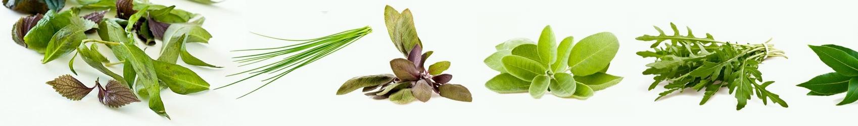 Hierbas arom ticas al por mayor y hosteler a for Cultivo de plantas aromaticas y especias